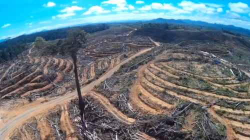 indonesian-palm-oil-deforestation